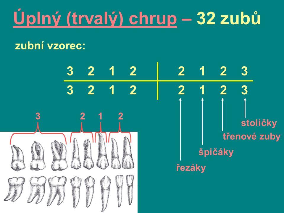 Úplný (trvalý) chrup – 32 zubů 3 2 1 2 2 1 2 3 3 2 1 2 2 1 2 3 zubní vzorec: stoličky třenové zuby špičáky řezáky 2123