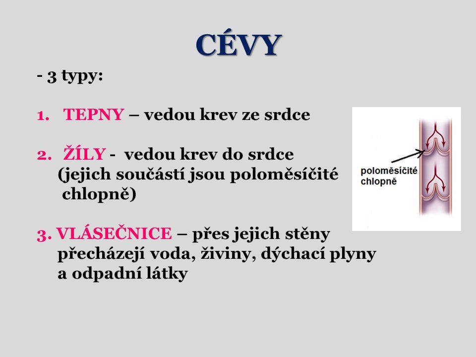 CÉVY - 3 typy: 1.TEPNY – vedou krev ze srdce 2.ŽÍLY - vedou krev do srdce (jejich součástí jsou poloměsíčité chlopně) 3.