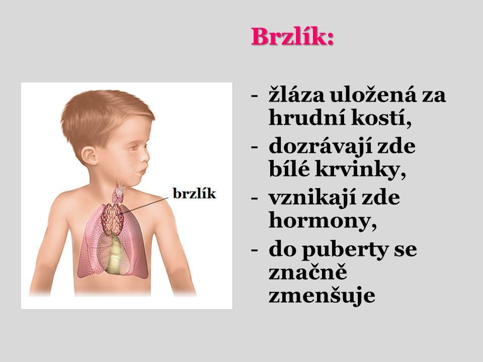 Brzlík: -žláza uložená za hrudní kostí, -dozrávají zde bílé krvinky, -vznikají zde hormony, -do puberty se značně zmenšuje