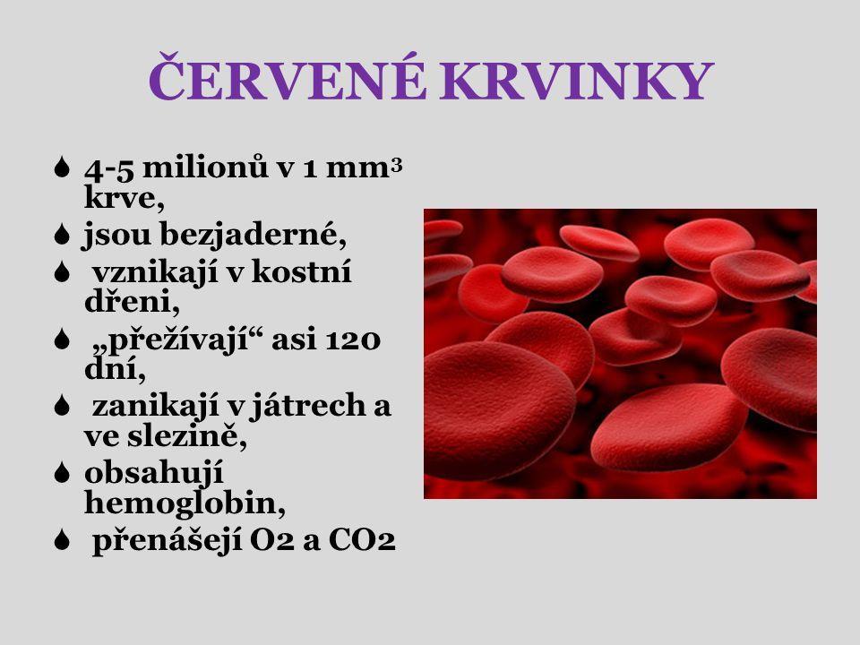 """ČERVENÉ KRVINKY  4-5 milionů v 1 mm 3 krve,  jsou bezjaderné,  vznikají v kostní dřeni,  """"přežívají asi 120 dní,  zanikají v játrech a ve slezině,  obsahují hemoglobin,  přenášejí O2 a CO2"""