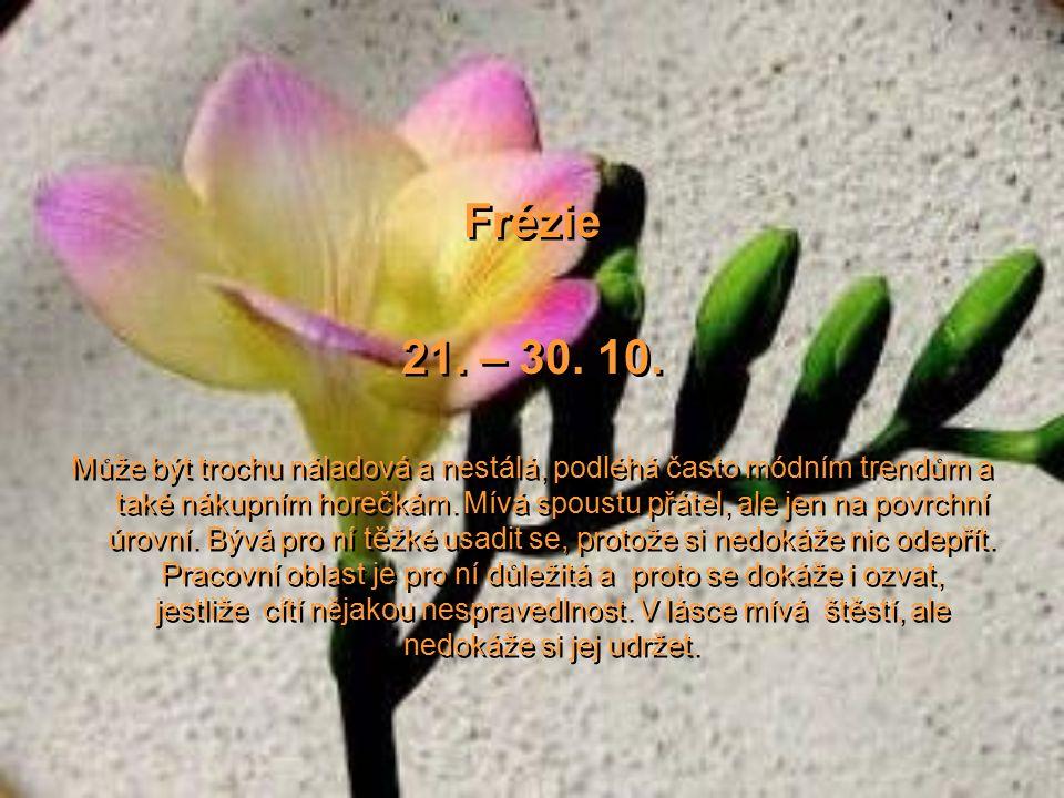 Hyacint 11. – 20. 10. Krásně a omamně voní a přitahuje, tak i lidé v tomto znamení mají zvláštní kouzlo osobnosti. Jsou nejen přitažliví a spolehliví,