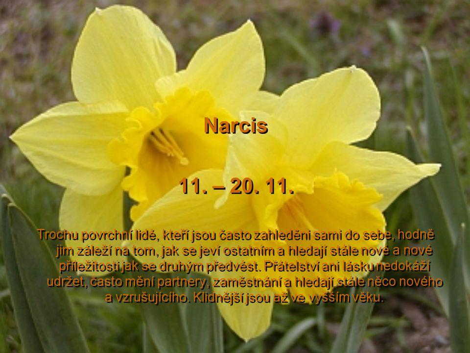 Chryzantéma 1.– 10. 11. 2.Trochu náladová osoba, která má v životě velké cíle, základním úkolem člověka v tomto znamení je naučit se trpělivosti a lás