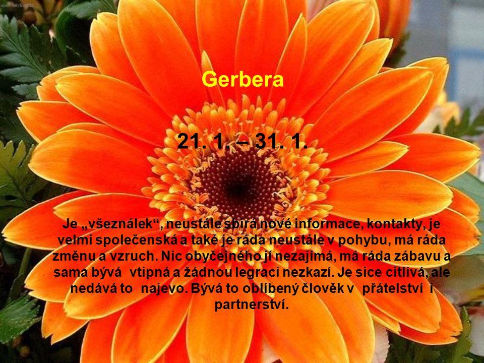 Astra 11. – 20. 1. Jedinci v tomto květinovém znamení bývají velmi praktičtí a mají výborné organizační schopnosti, vše umí do posledního puntíku napl
