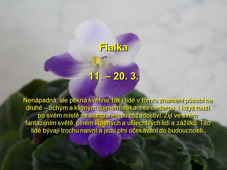 Mimóza 1.– 10. 3. 2.Zajímavá, nevšední květina a takový je i člověk tohoto znamení. Je to velký snílek, většinou má neuvěřitelně krásné oči a působí a