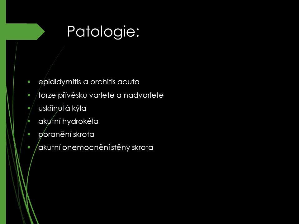 Patologie:  epididymitis a orchitis acuta  torze přívěsku varlete a nadvarlete  uskřinutá kýla  akutní hydrokéla  poranění skrota  akutní onemoc