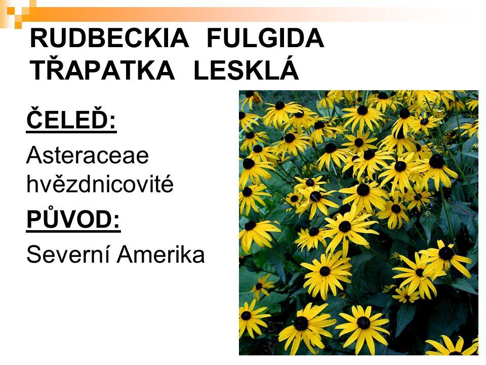 RUDBECKIA FULGIDA TŘAPATKA LESKLÁ ČELEĎ: Asteraceae hvězdnicovité PŮVOD: Severní Amerika