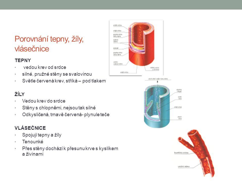 Porovnání tepny, žíly, vlásečnice TEPNY vedou krev od srdce silné, pružné stěny se svalovinou Světle červená krev, stříká – pod tlakem ŽÍLY Vedou krev
