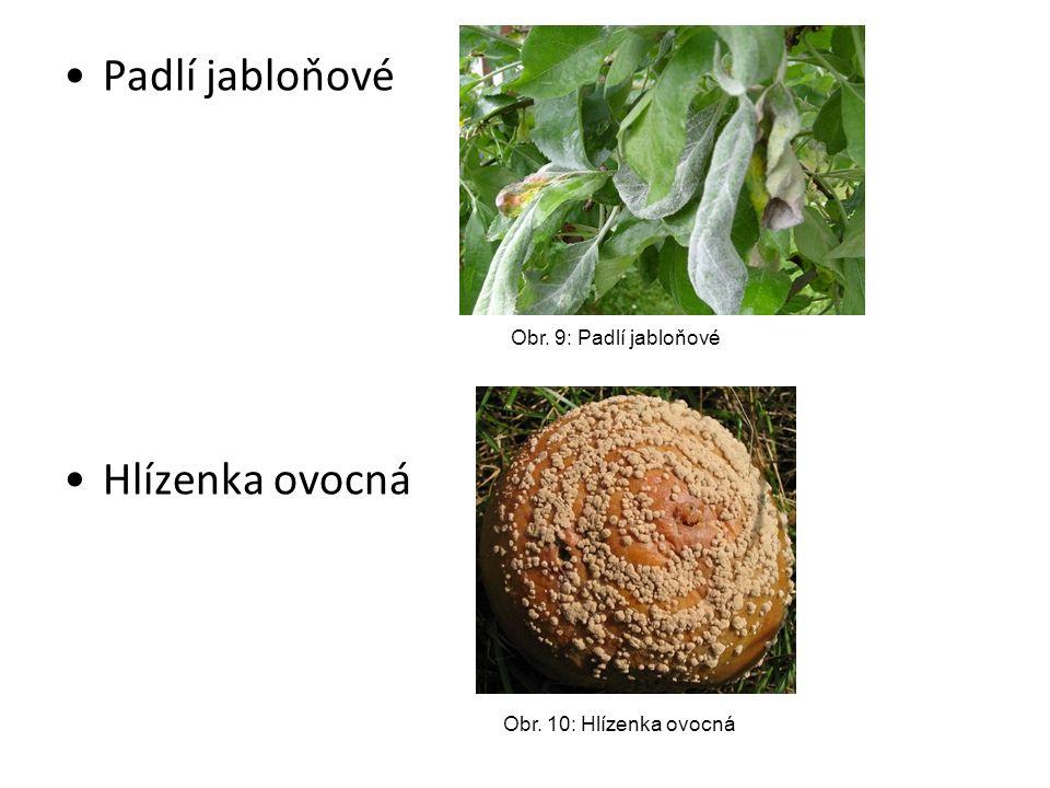 Padlí jabloňové Hlízenka ovocná Obr. 9: Padlí jabloňové Obr. 10: Hlízenka ovocná