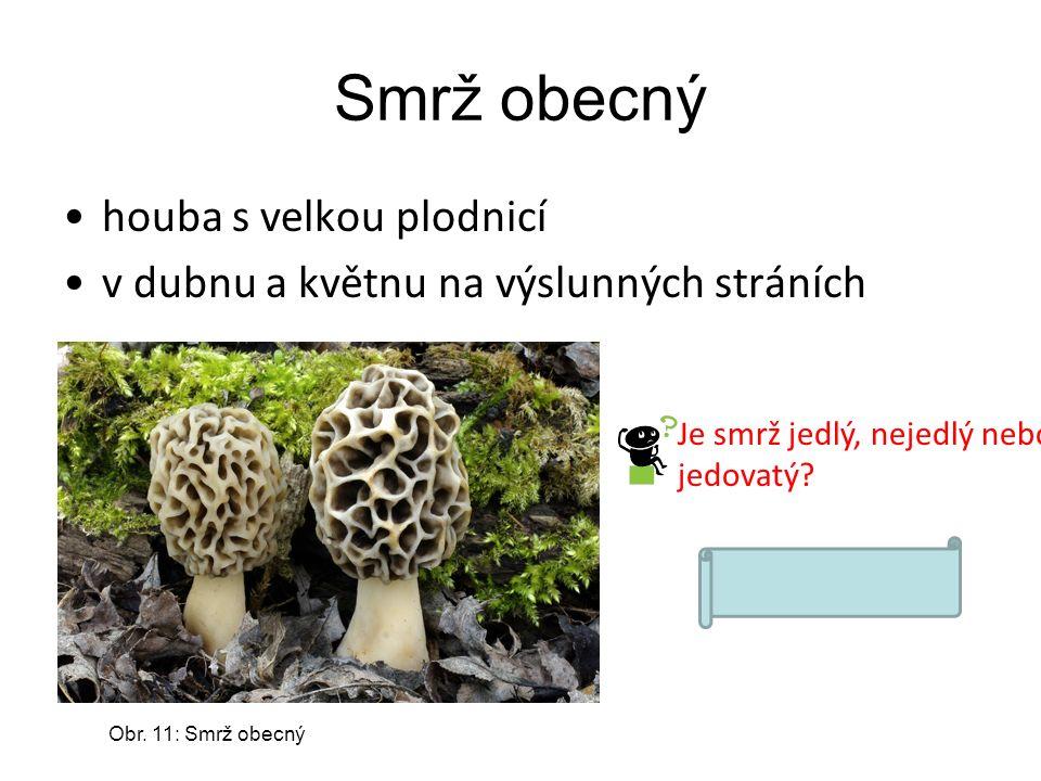 Smrž obecný houba s velkou plodnicí v dubnu a květnu na výslunných stráních Obr. 11: Smrž obecný Je smrž jedlý, nejedlý nebo jedovatý? Smrž je jedlý.