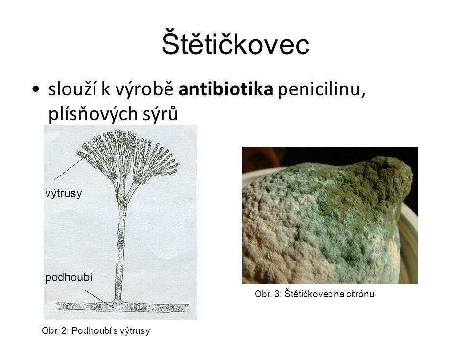 Štětičkovec slouží k výrobě antibiotika penicilinu, plísňových sýrů podhoubí výtrusy Obr. 3: Štětičkovec na citrónu Obr. 2: Podhoubí s výtrusy