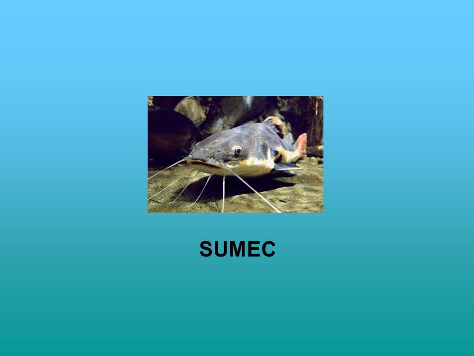 SUMEC