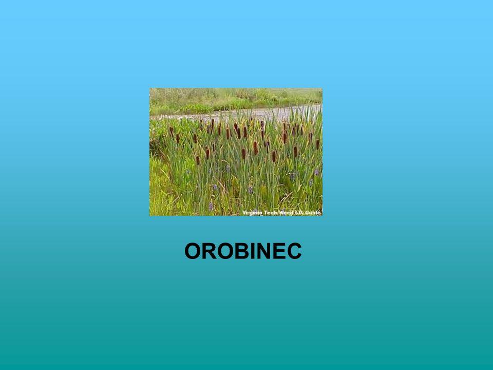 OROBINEC