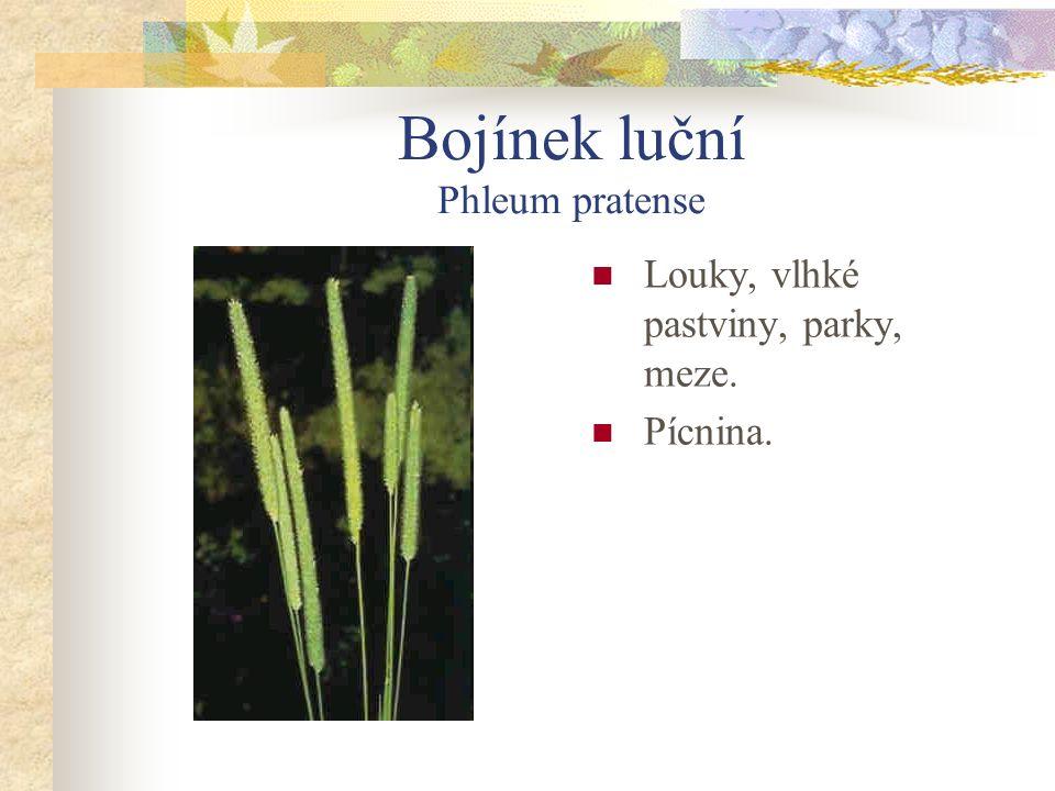 Psárka luční Alopecurus pratensis Vlhké louky, příkopy.