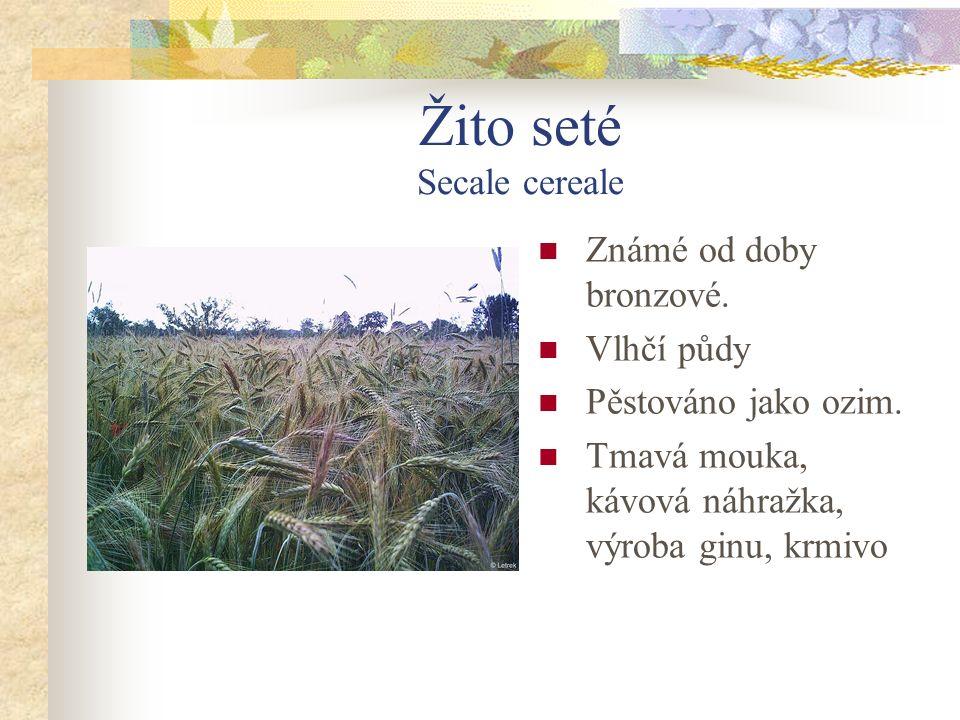 Žito seté Secale cereale Známé od doby bronzové.Vlhčí půdy Pěstováno jako ozim.