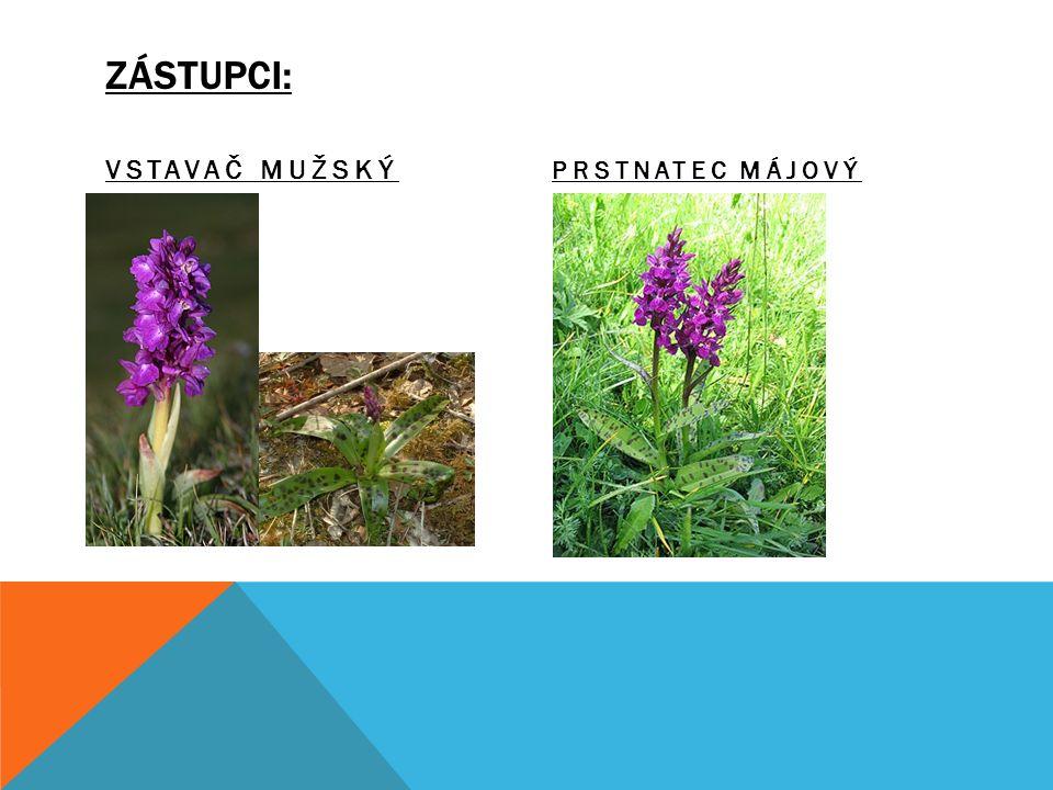 CHARAKTERISTICKÉ ZNAKY: - Vytrvalé byliny. - Oddenky nebo kořenové hlízy.