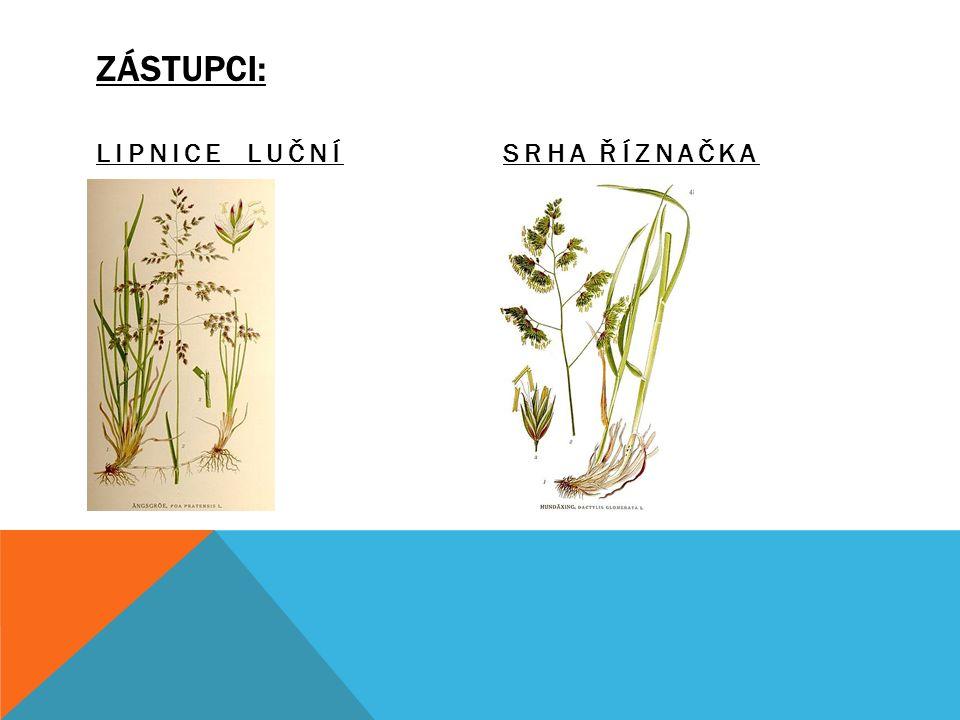 CHARAKTERISTICKÉ ZNAKY: Většinou jednodomé byliny. Stonek = stéblo. Stonek se souběžnou žilnatinou. Květenství = klas, lata. Opylovány větrem. Květy o