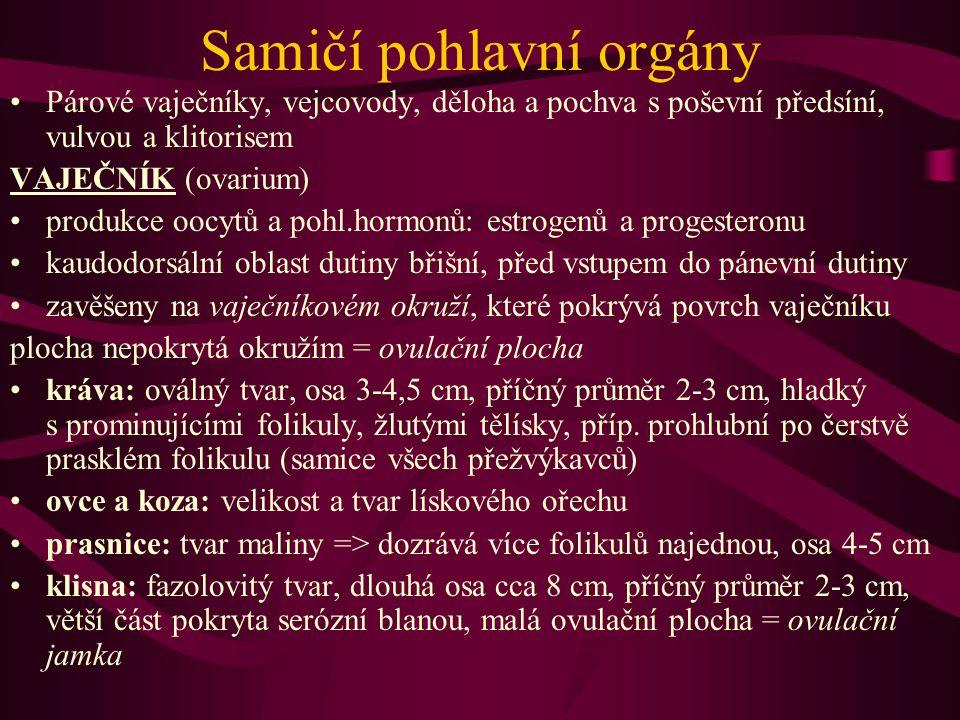 Samičí pohlavní orgány Párové vaječníky, vejcovody, děloha a pochva s poševní předsíní, vulvou a klitorisem VAJEČNÍK (ovarium) produkce oocytů a pohl.