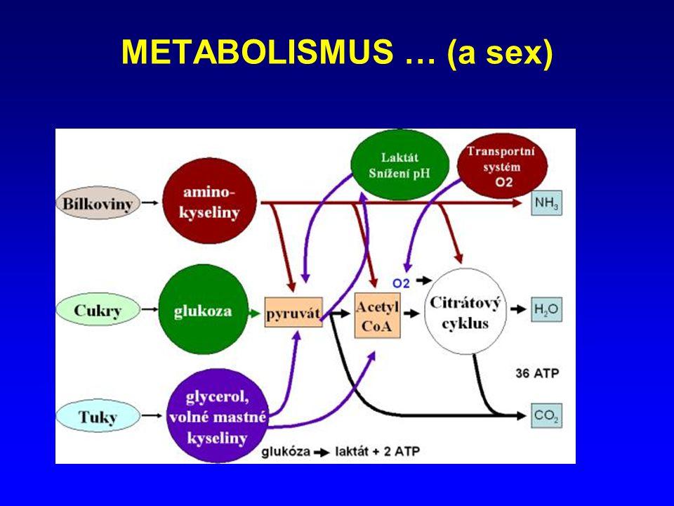 METABOLISMUS … (a sex)