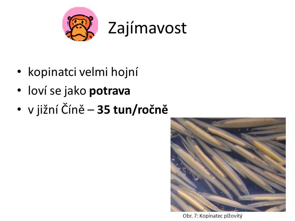 Obr. 8: Vývoj strunatců