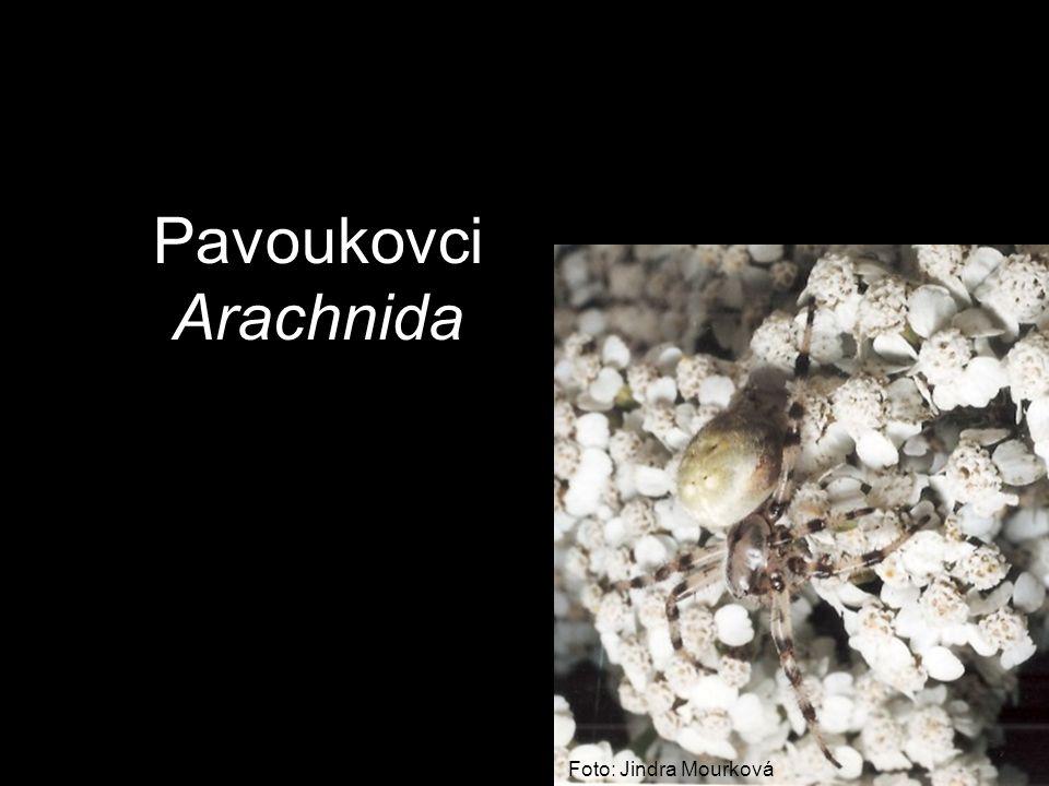 Pavoukovci Arachnida Foto: Jindra Mourková