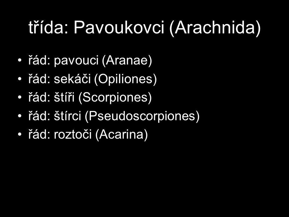 třída: Pavoukovci (Arachnida) řád: pavouci (Aranae) řád: sekáči (Opiliones) řád: štíři (Scorpiones) řád: štírci (Pseudoscorpiones) řád: roztoči (Acarina)