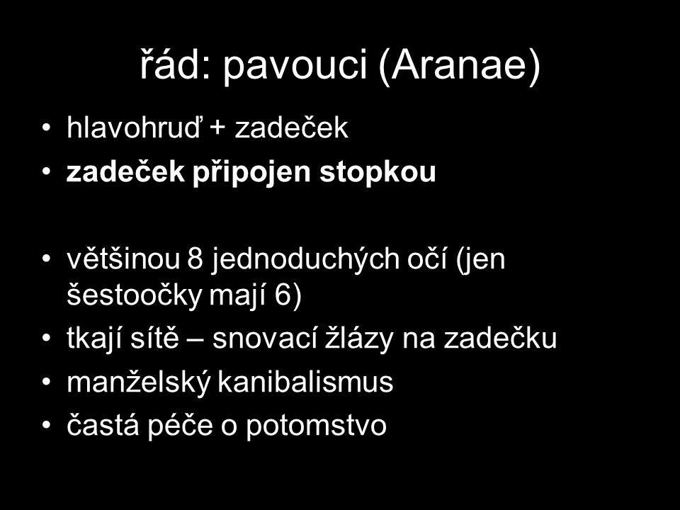 řád: roztoči (Acarina) většinou do mm (max.