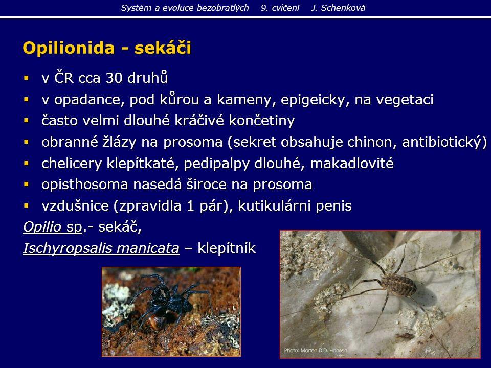 Opilionida - sekáči  v ČR cca 30 druhů  v opadance, pod kůrou a kameny, epigeicky, na vegetaci  často velmi dlouhé kráčivé končetiny  obranné žláz
