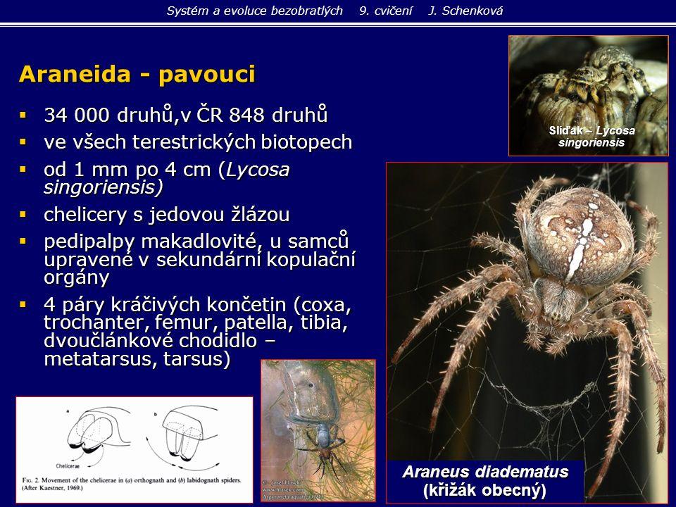 Araneida - pavouci  34 000 druhů,v ČR 848 druhů  ve všech terestrických biotopech  od 1 mm po 4 cm (Lycosa singoriensis)  chelicery s jedovou žláz
