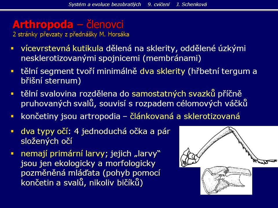 Acaridida - zákožkovci  bez vzdušnic, dýchají povrchem těla  volně žijící saprofágové, hodně parazitů ptáků, savců včetně člověka Sarcoptes scabiei - zákožka svrabová: asi 0,5 mm Acarus siro - sladokaz moučný: v mouce, moučných výrobcích, obilí Systém a evoluce bezobratlých 9.