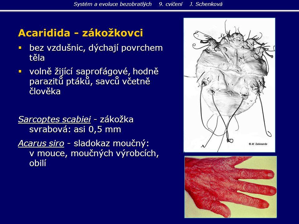 Acaridida - zákožkovci  bez vzdušnic, dýchají povrchem těla  volně žijící saprofágové, hodně parazitů ptáků, savců včetně člověka Sarcoptes scabiei