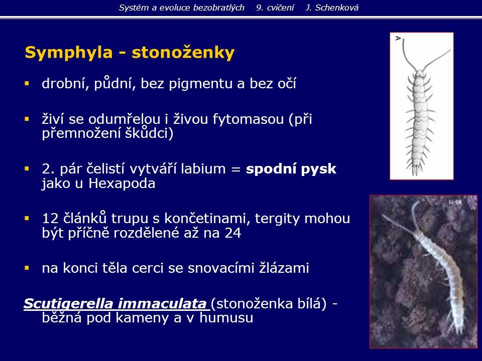   drobní, půdní, bez pigmentu a bez očí   živí se odumřelou i živou fytomasou (při přemnožení škůdci)   2. pár čelistí vytváří labium = spodní p