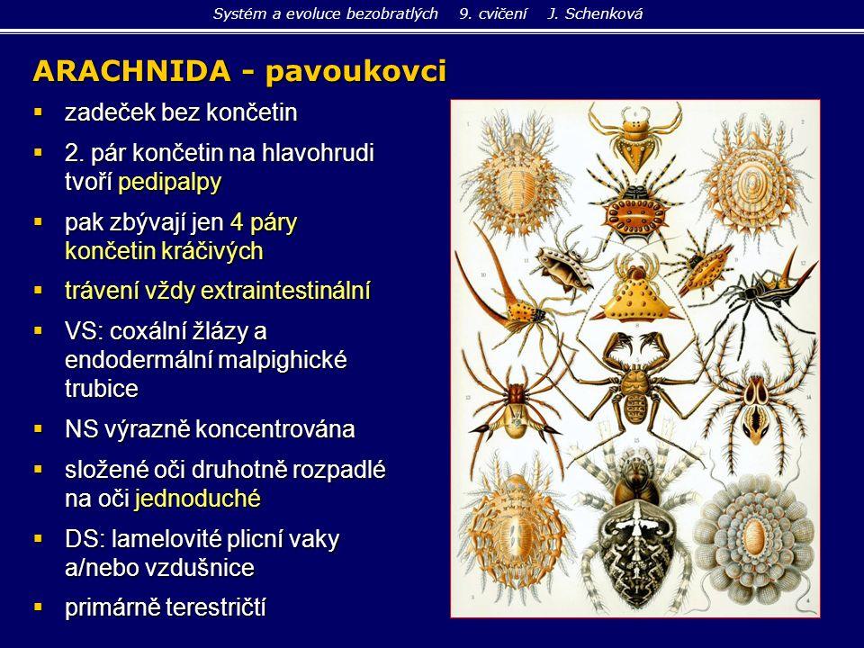 ARACHNIDA - pavoukovci  zadeček bez končetin  2. pár končetin na hlavohrudi tvoří pedipalpy  pak zbývají jen 4 páry končetin kráčivých  trávení vž