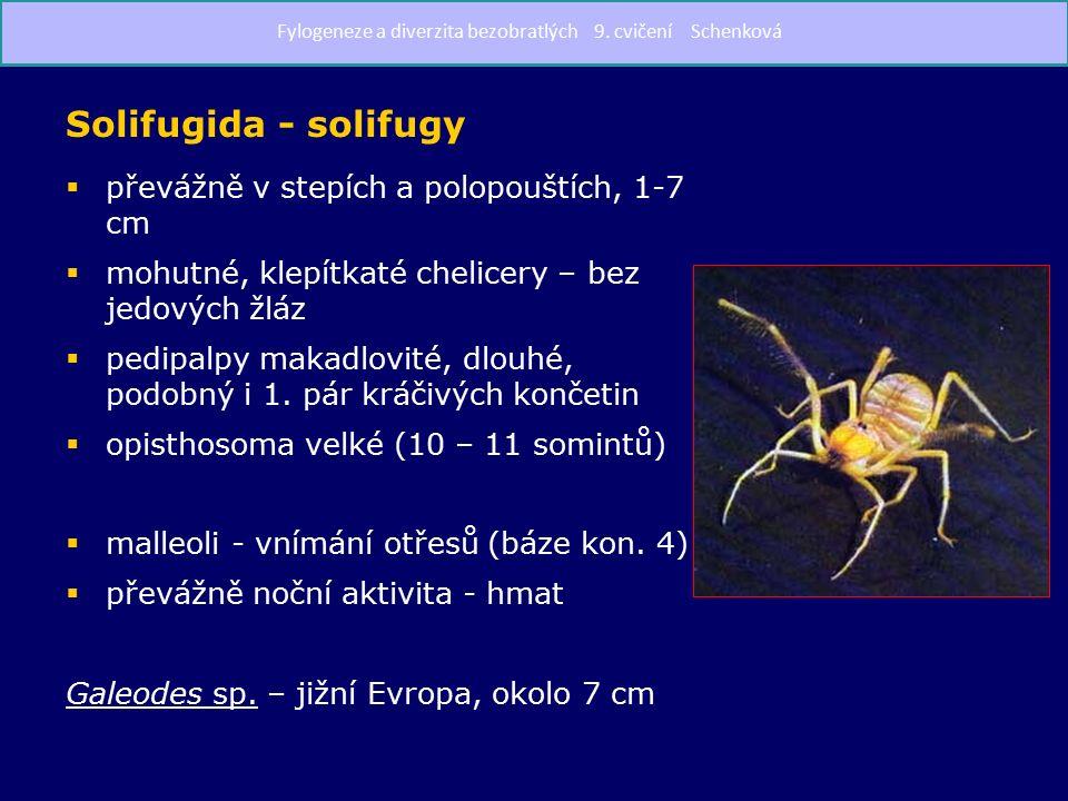 Solifugida - solifugy  převážně v stepích a polopouštích, 1-7 cm  mohutné, klepítkaté chelicery – bez jedových žláz  pedipalpy makadlovité, dlouhé, podobný i 1.
