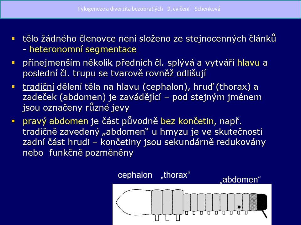 Araneida - pavouci  34 000 druhů,v ČR 848 druhů  ve všech terestrických biotopech  od 1 mm po 4 cm (Lycosa singoriensis)  chelicery s jedovou žlázou  pedipalpy makadlovité, u samců upravené v sekundární kopulační orgány  4 páry kráčivých končetin (coxa, trochanter, femur, patella, tibia, dvoučlánkové chodidlo – metatarsus, tarsus) Araneus diadematus křižák obecný Slíďak – Lycosa singoriensis Fylogeneze a diverzita bezobratlých 9.
