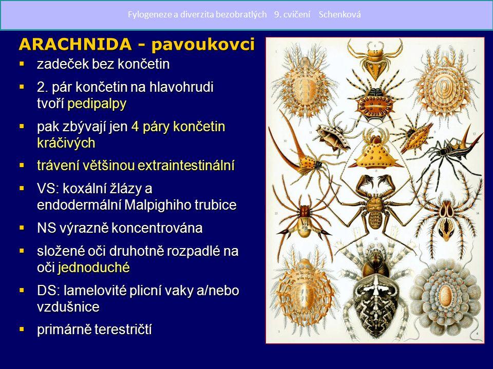 Scorpionida - štíři   predátoři, většinou noční aktivita   9 mm až 21 cm   většinou v tropech a subtropech   1.