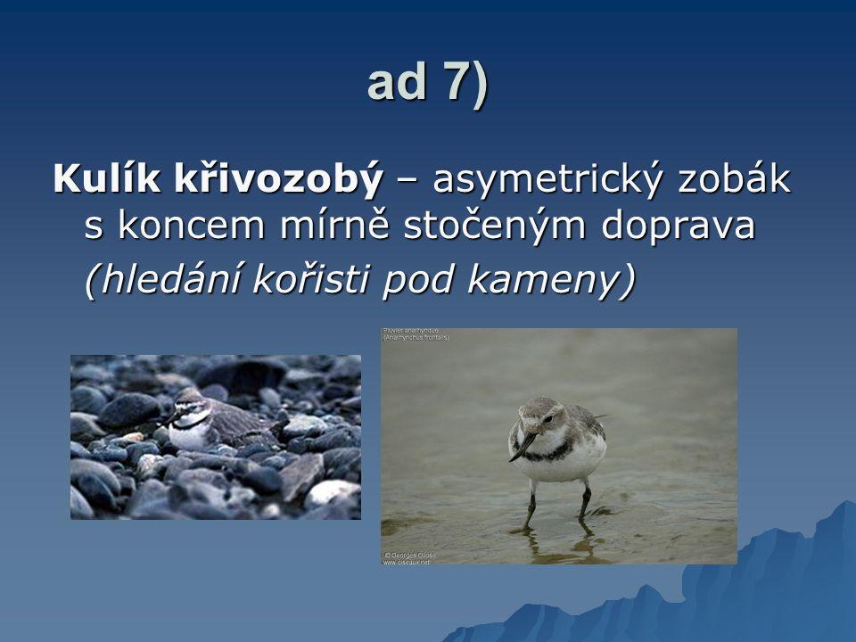 ad 7) Kulík křivozobý – asymetrický zobák s koncem mírně stočeným doprava (hledání kořisti pod kameny)