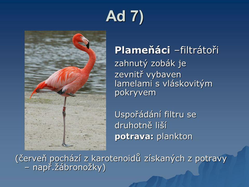 Ad 7) Plameňáci –filtrátoři zahnutý zobák je zevnitř vybaven lamelami s vláskovitým pokryvem Uspořádání filtru se druhotně liší potrava: plankton (červeň pochází z karotenoidů získaných z potravy – např.žábronožky)