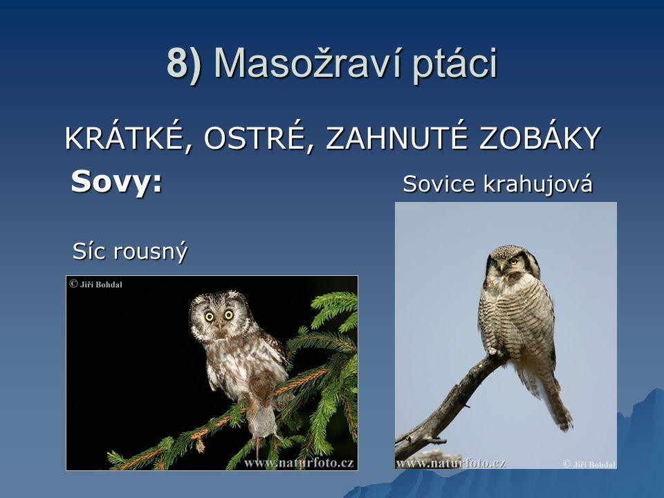 8) Masožraví ptáci KRÁTKÉ, OSTRÉ, ZAHNUTÉ ZOBÁKY Sovy: Sovice krahujová Síc rousný