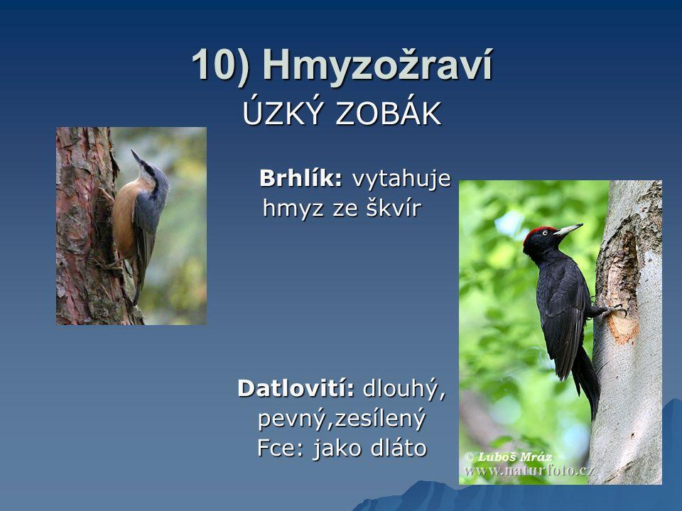 10) Hmyzožraví ÚZKÝ ZOBÁK Brhlík: vytahuje hmyz ze škvír Datlovití: dlouhý, pevný,zesílený Fce: jako dláto