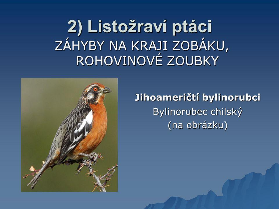 2) Listožraví ptáci ZÁHYBY NA KRAJI ZOBÁKU, ROHOVINOVÉ ZOUBKY Jihoameričtí bylinorubci Bylinorubec chilský (na obrázku)