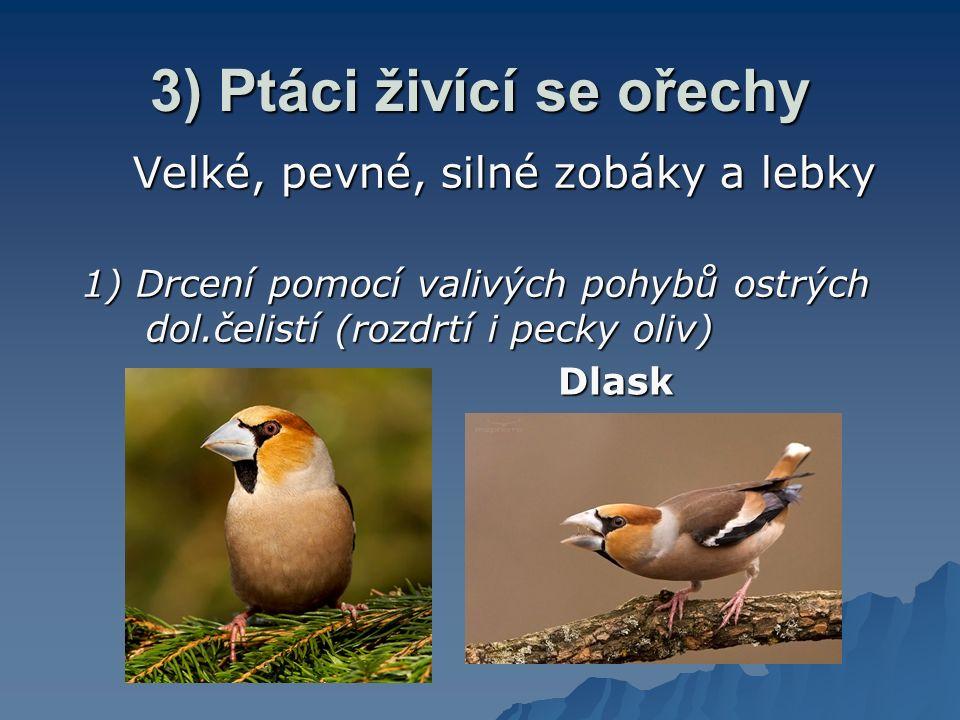 3) Ptáci živící se ořechy Velké, pevné, silné zobáky a lebky 1) Drcení pomocí valivých pohybů ostrých dol.čelistí (rozdrtí i pecky oliv) Dlask