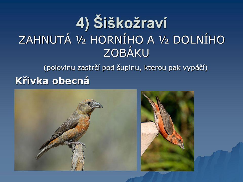 Ad 7) Kachna morčák – vroubkovaný okraj zobáku Pelikán – kožovitý vak, rozšířitelný (větší ryby) (větší ryby)