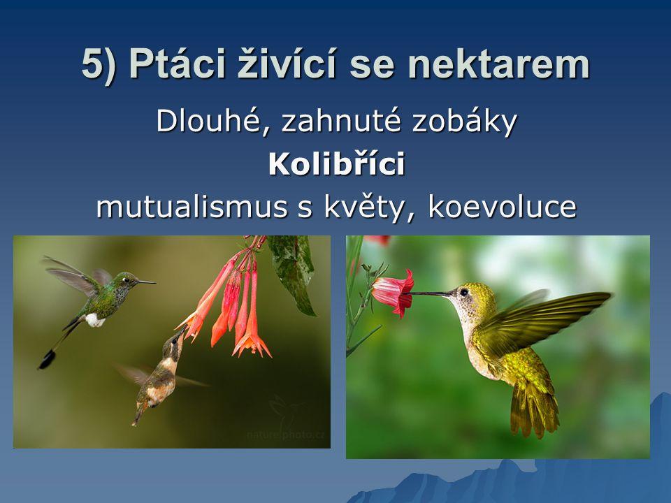 5) Ptáci živící se nektarem Dlouhé, zahnuté zobáky Kolibříci mutualismus s květy, koevoluce