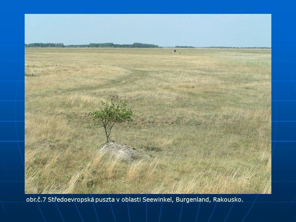 obr.č.7 Středoevropská puszta v oblasti Seewinkel, Burgenland, Rakousko.