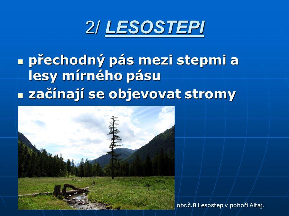 2/ LESOSTEPI přechodný pás mezi stepmi a lesy mírného pásu přechodný pás mezi stepmi a lesy mírného pásu začínají se objevovat stromy začínají se obje