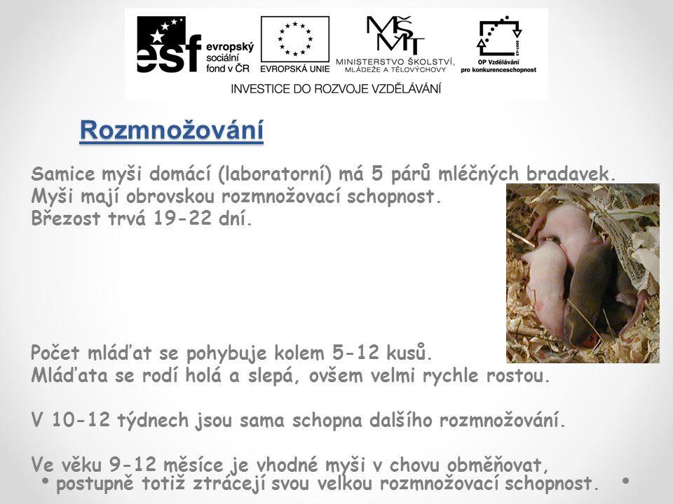 Rozmnožování Samice myši domácí (laboratorní) má 5 párů mléčných bradavek.