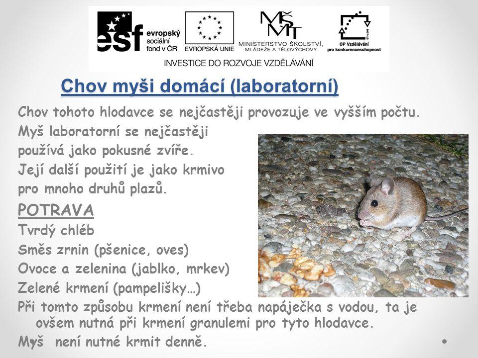 Chov myši domácí (laboratorní) Chov tohoto hlodavce se nejčastěji provozuje ve vyšším počtu.