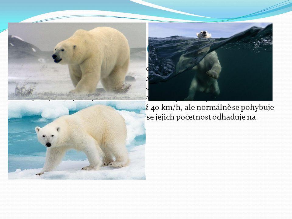 Medvěd lední Medvěd lední je vedle medvěda kodiaka největší žijící pozemní šelma.