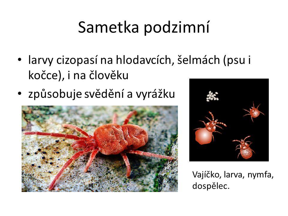 Sametka podzimní larvy cizopasí na hlodavcích, šelmách (psu i kočce), i na člověku způsobuje svědění a vyrážku Vajíčko, larva, nymfa, dospělec.