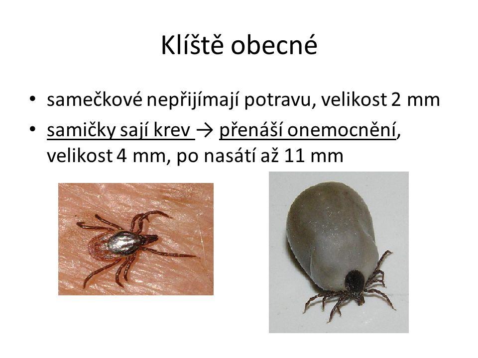 Klíště obecné samečkové nepřijímají potravu, velikost 2 mm samičky sají krev → přenáší onemocnění, velikost 4 mm, po nasátí až 11 mm